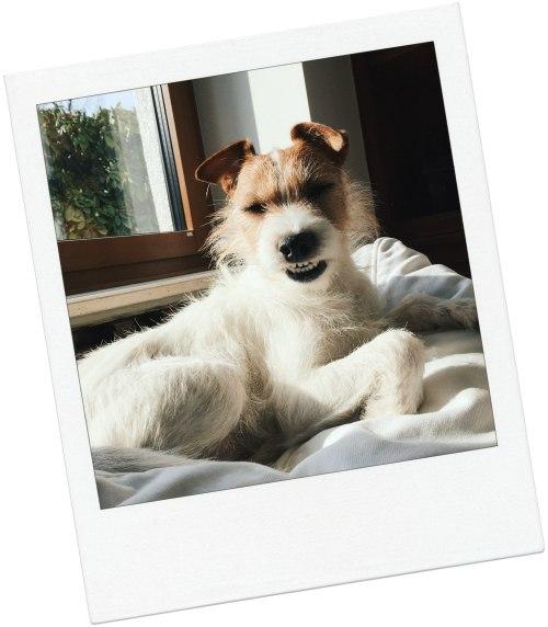 das perfekte selfie v j du modeblog aus deutschland. Black Bedroom Furniture Sets. Home Design Ideas
